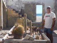 Cacti flourish in an an old cart from the salt pans